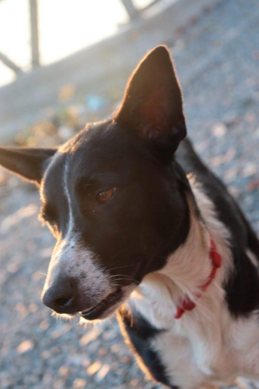 Hoje, Laika é a estrela do ferry. Anderson Luiz Lana, supervisor de manutenção do ferry, brinca que foi ela que adotou os funcionários – Foto: Arquivo pessoal/ND