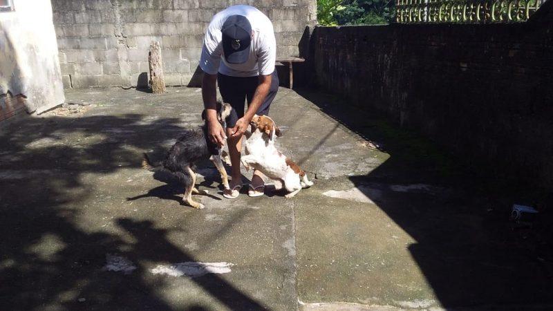 Cachorrinhos estavam há dois meses abrigados na Dibea
