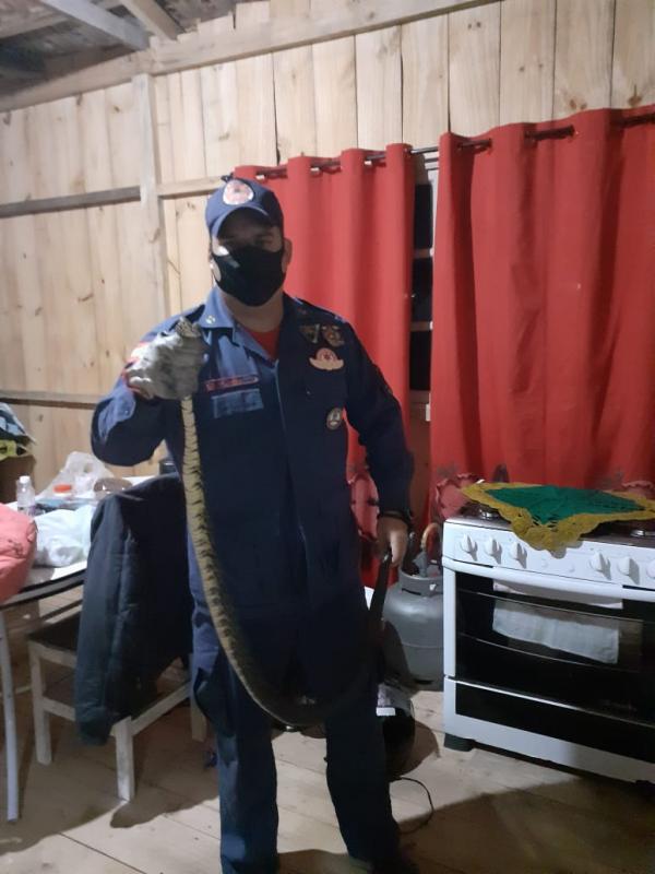 Cobra foi capturada no telhado de casa em Garuva – Foto: CBM/Divulgação