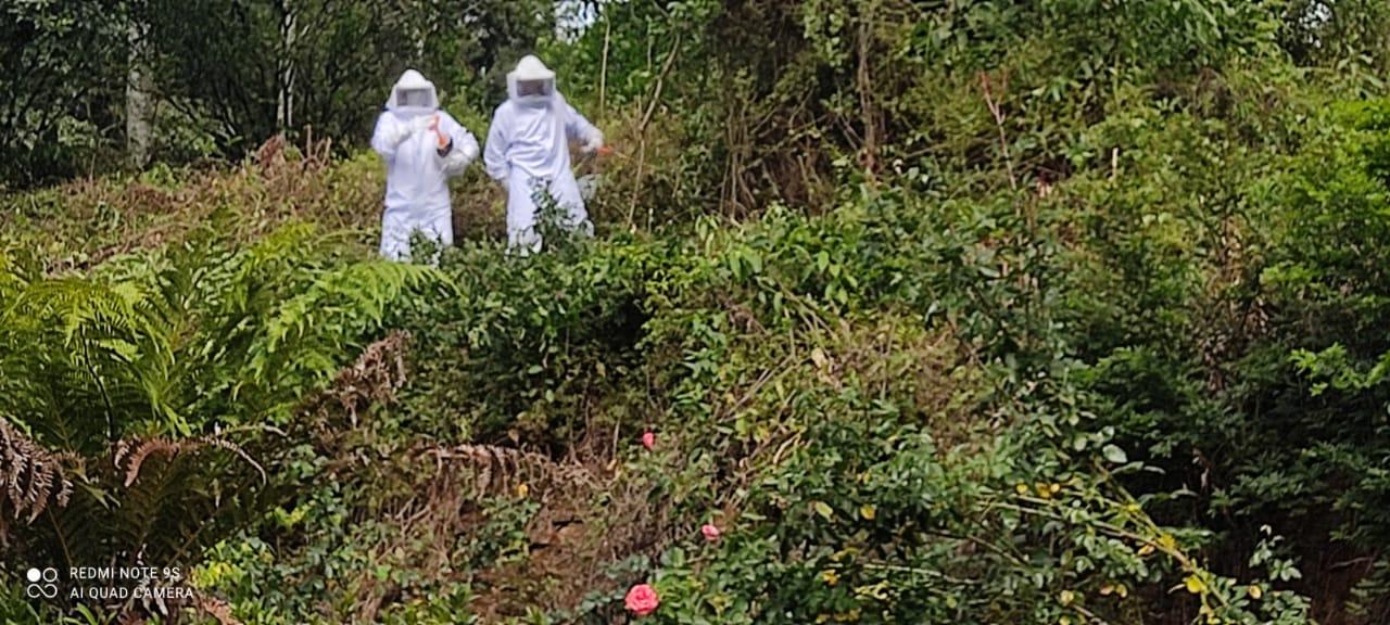 Ataque ocorreu enquanto os homens faziam o roçado da propriedade. - Cristiano Mortari/Aliança FM/Reprodução/ND
