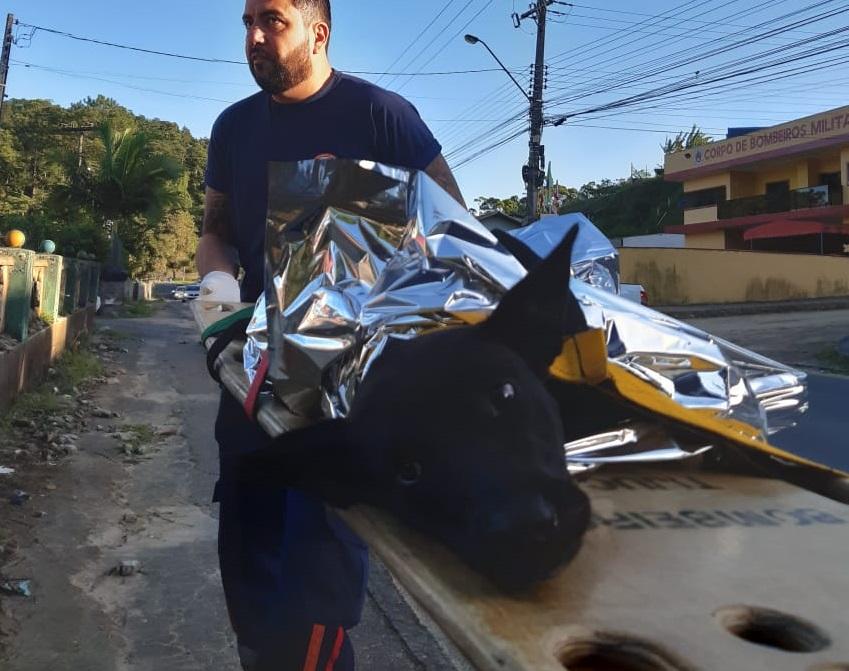 Samu faz resgate inusitado na manhã desta quarta-feira em Blumenau - Samu/Divulgação