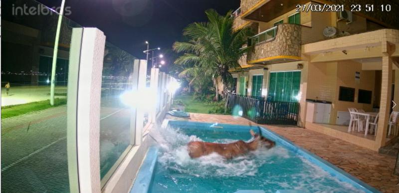 Assustado, animal quebrou cerca de vidro e caiu em piscina – Foto: Reprodução Redes Sociais/ND