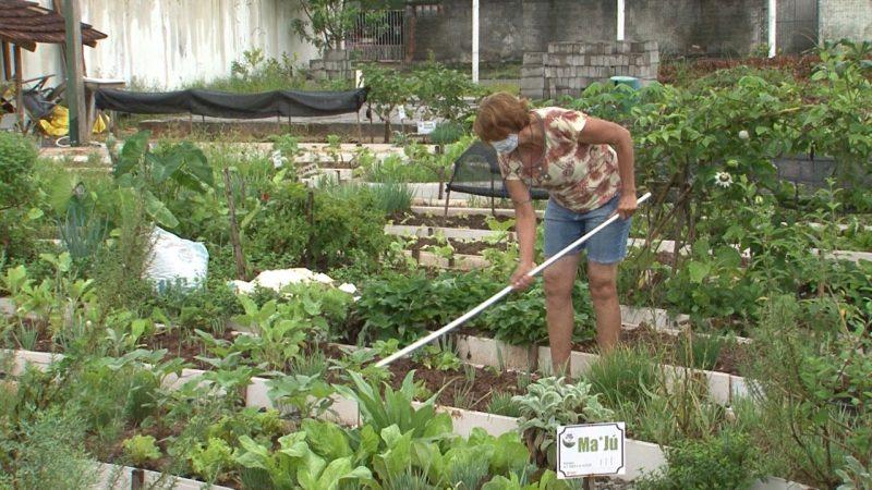 Para dona Nadir, cuidar da horta faz bem também para a mente – Foto: Juliano Masselai/NDTV