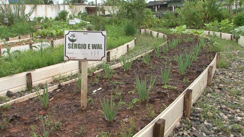 Cada vizinho cuida de uma parte da horta comunitária – Foto: Juliano Masselai/NDTV