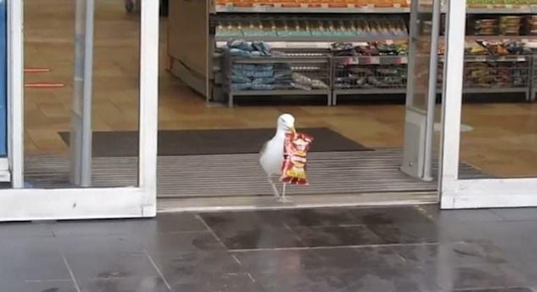 Gaivota invadiu mercado e roubou pacite de batatas fritas – Foto: Reprodução/ Facebook Neil Traynor