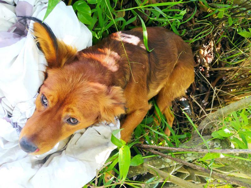 O cão, que recebeu o nome de Kombi, teve uma das patas quebradas