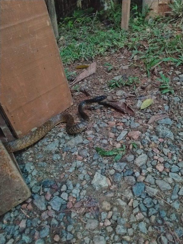Serpente foi encontrada na recepção de um hospital de Guaramirim – Foto: Bombeiros Voluntários