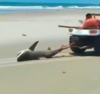Tubarão é morto após ser torturado em praia do Ceará – Foto: Reprodução/Redes Sociais