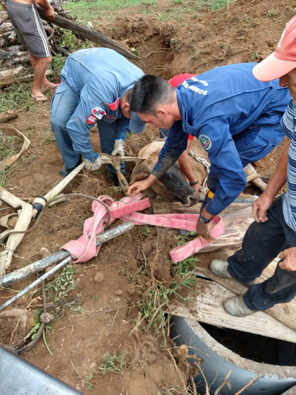 Vaca cai em tubulação em Chapadão do Lageado - CBM/Divulgação