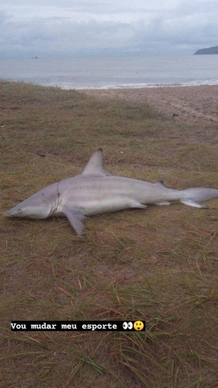 Tubarão teria ficado preso em uma rede de pesca – Foto: Corpo de Bombeiros Balneário Piçarras