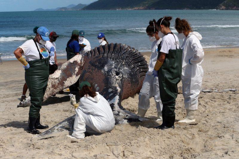 Necropsia deu resultado inconclusivo e perícia solicitou novos exames – Foto: Nilson Coelho/R3 Animal/Divulgação/ND