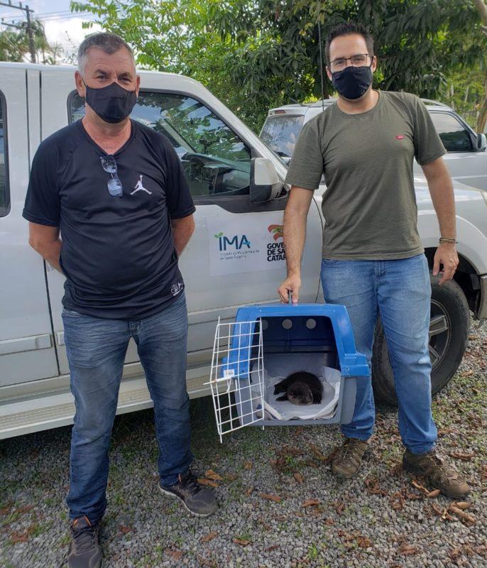 Ele foi encaminhado para o Centro de Triagem de Animais Silvestres, onde ficará até estar pronto para voltar à natureza – Foto: Fujama/Divulgação
