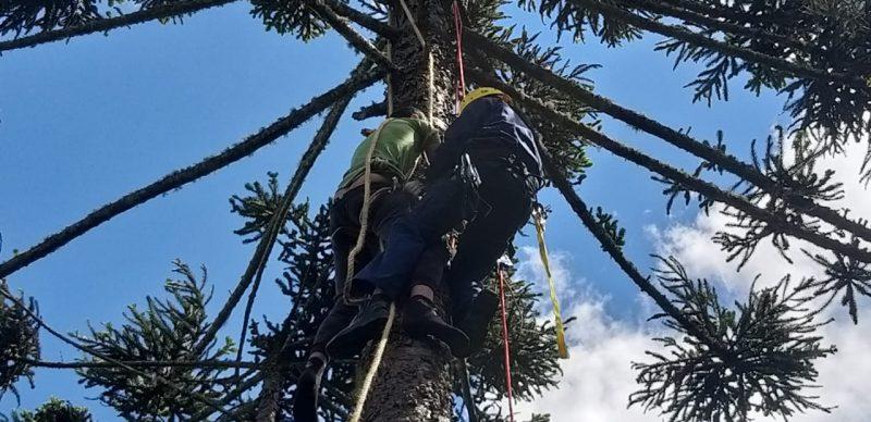 Os bombeiros chegaram na localidade de Morro Agudo, onde o jovem estava, por volta das 11h. Ele seguia preso no topo da árvore, a uma altura de 20 metros do chão. Os bombeiros então ancoraram um cabo de salvamento de 50m no pé do pinheiro. – Foto: Bombeiros/Divulgação/ND