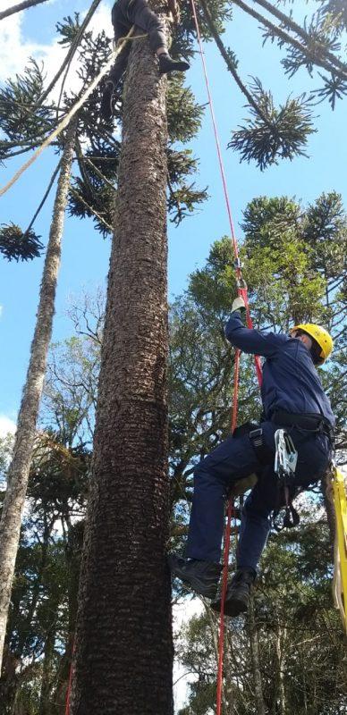 De acordo com 5° Batalhão de Bombeiros, o jovem contou que subiu na árvore para retirar pinhas e quando chegou no topo, se sentiu cansado. Ao ver que poderia cair, ele se amarrou no pinheiro com uma corda e ficou aguardando socorro. – Foto: Bombeiros/Divulgação/ND