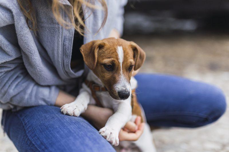 Condomínios não devem impor locais para entrada e saída de pets- Foto: Freepik