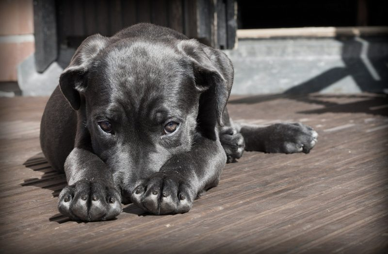 Réus foram condenados a multa por maltratar cachorro – Foto: Pixabay
