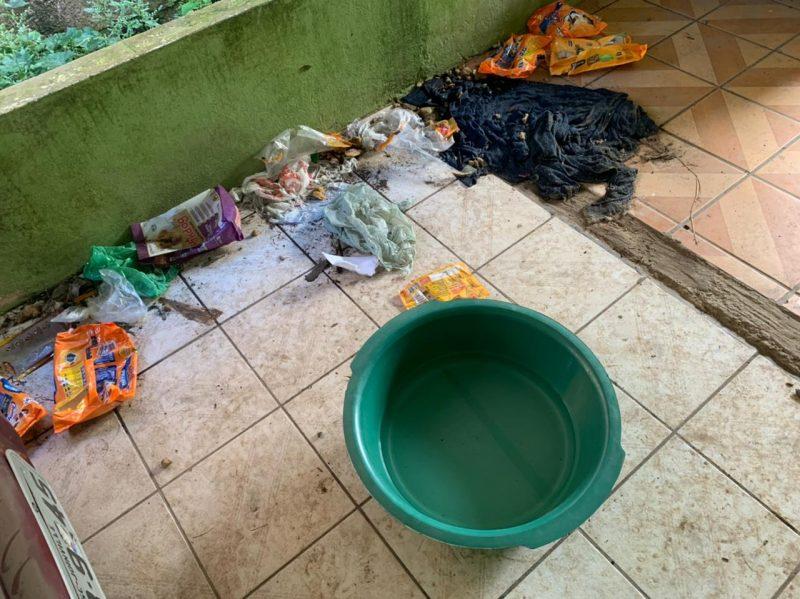 Muita sujeira, panos molhados no local onde estava o cãozinho – Foto: Polícia Civil de Joinville/Divulgação ND