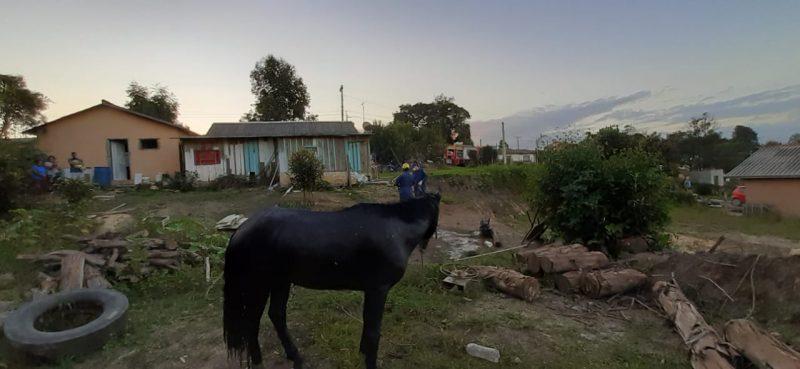 Apesar do susto, cavalo foi resgatado sem ferimentos – Foto: 9BBM/Divulgação