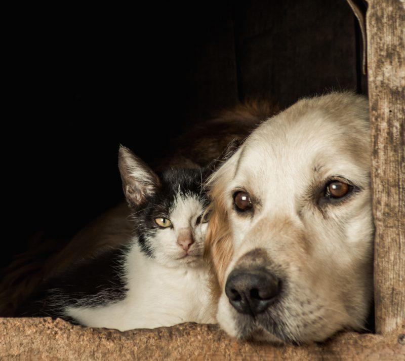 Lei que aumenta proteção de animais domésticos ainda não foi regulamentada em SC – Foto: Freepik/Reprodução/ND