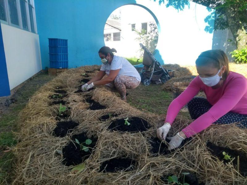 Espaço produz alimentos coletivamente, usando o composto fornecido pelo programa municipal de agricultura urbana – Foto: Divulgação/PMF