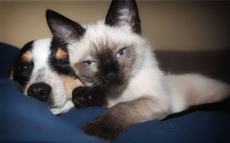 Cachorro e gato são identificados com anticorpos do novo coronavírus – Foto: Pixabay/Reprodução/ND
