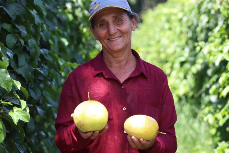 Dona Helena é uma das produtoras que fazem de Araquari, a capital catarinense do maracujá – Foto: Divulgação