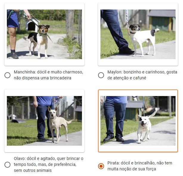 No site, é possível conhecer os animais disponíveis para adoção – Foto: Reprodução