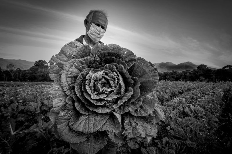 Foto premiada mostra o agricultor Edésio Voges, de Antônio Carlos – Foto: Ricardo Wolffenbüttel/Divulgação/Secom/ND