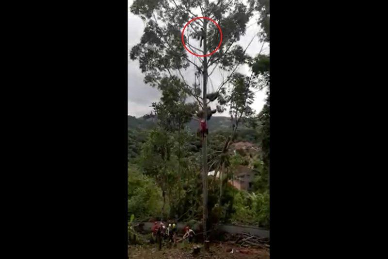 Bombeiros resgatam homem preso em árvore a 20 metros do chão em SC – Foto: Divulgação/Corpo de Bombeiros Blumenau