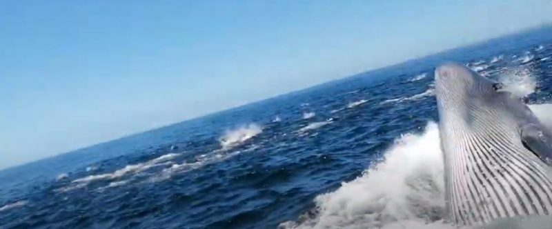 Homem quase é engolido vivo por baleia – Foto: Reprodução/ND