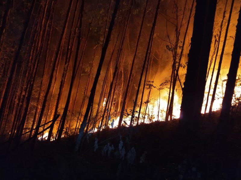 Um incêndio destruiu 70 mil m² de área de reflorestamento em Bela Vista do Toldo. A área produzia eucaliptos e, apesar do prejuízo, grande parte do terreno ainda foi salva pelos bombeiros – Foto: 9BBM/Divulgação