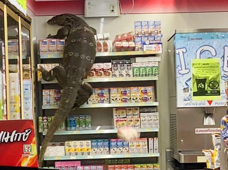 Animal gigante invadiu o supermercado – Foto: Reprodução/Twitter