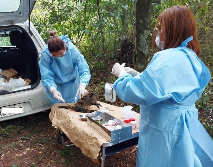Dois macacos, possivelmente mãe e filhote, foram encontrados mortos em São José do Cedro – Foto: Prefeitura de São José do Cedro/Divulgação/ND