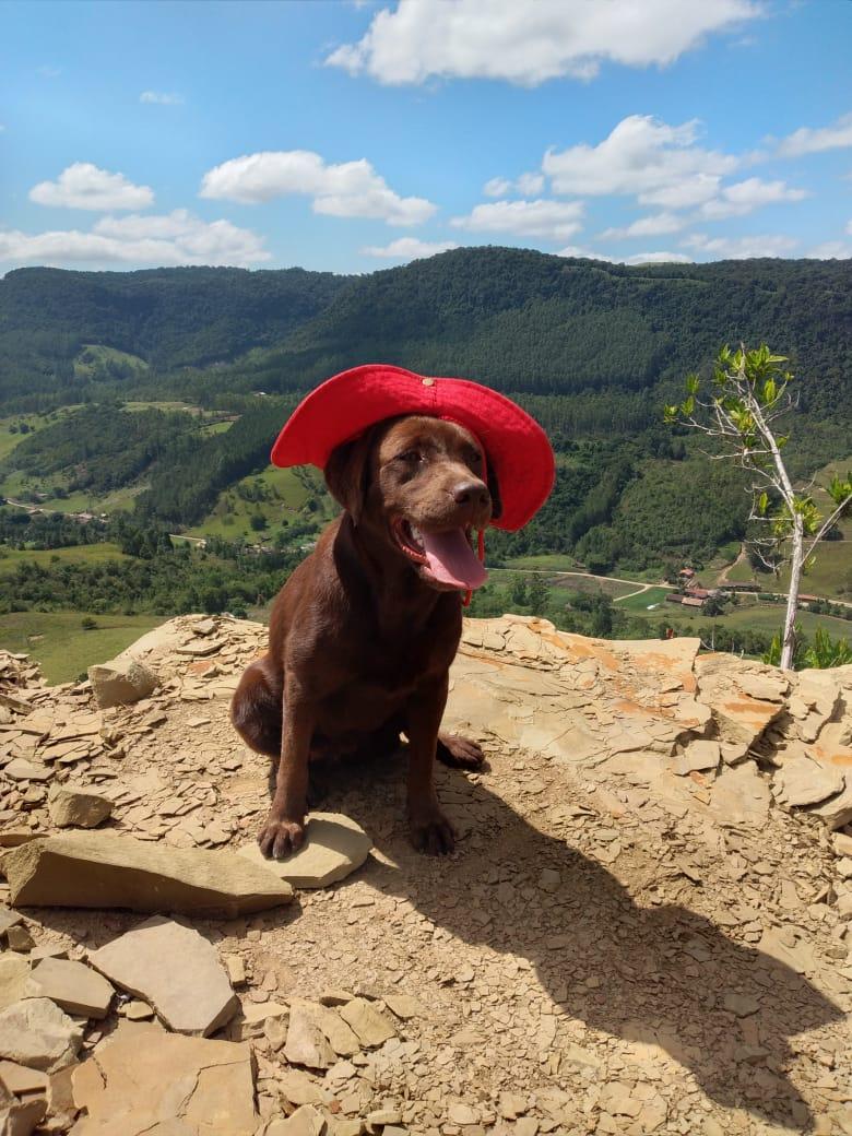 Benny tinha 2 anos e atuava como cão de resgate - Marcelo Lamin/Divulgação/ND