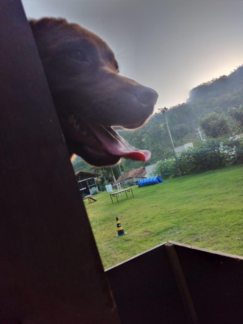 Benny fazia parte da Associação Cão Amigo Focinho Herói - Marcelo Lamin/Divulgação/ND
