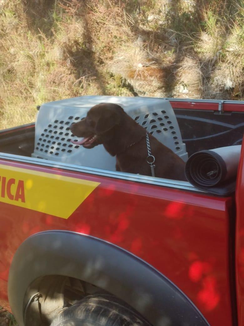 A cadela estava em processo de treinamentos para certificação para poder atuar em mais ações de resgate - Marcelo Lamin/Divulgação/ND