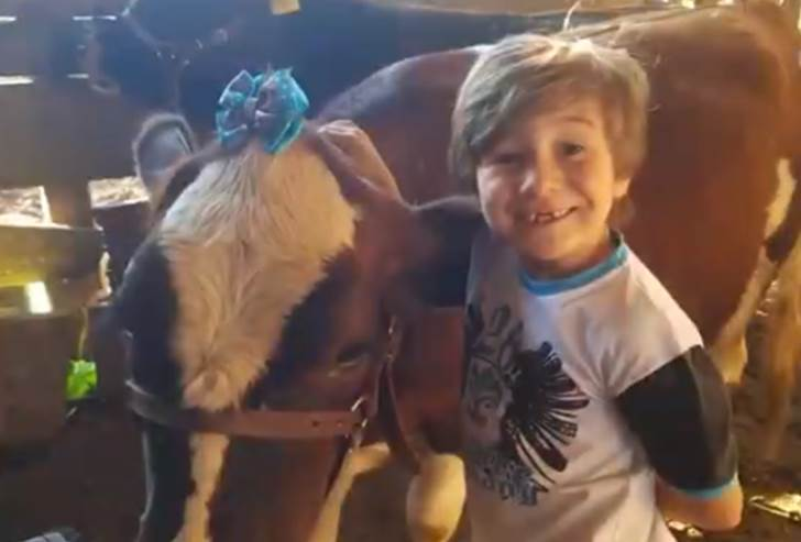 Vinícius de 6 anos, filho do casal Márcio e Jesieli Munaro, ao lado da mini vaca – Foto: Divulgação NDTV/ND