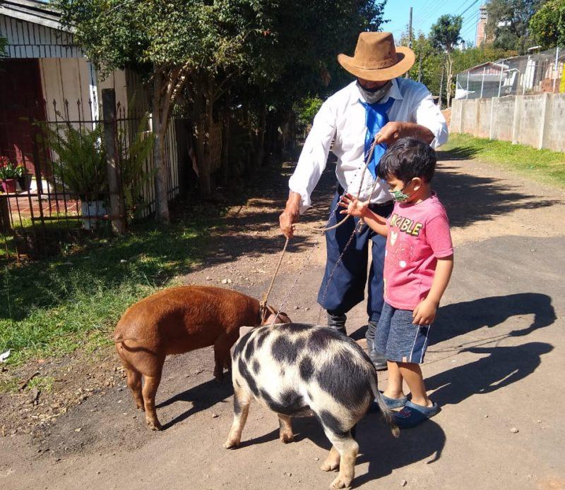 Na companhia de seu Zé está o neto Davi, que desde pequeno já tem esse amor pelos porquinhos do avô – Foto: Carolina Debiasi/ND