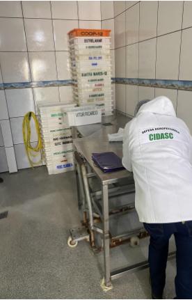 Ação de fiscalização apreende 3,6 toneladas de pescados impróprios ao consumo e interdita estabelecimento clandestino em Barra Velha – Foto: Ministério Público de SC/Divulgação ND