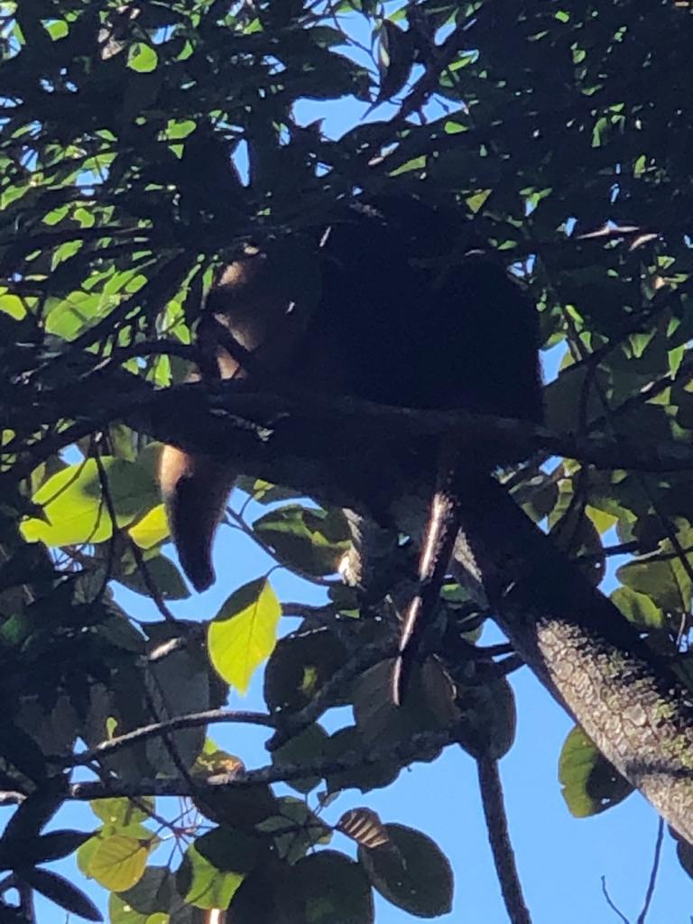 Tamanduá-mirim é resgatado e devolvido à natureza em Brusque - Divulgação/Corpo de Bombeiros