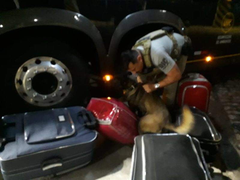 cães farejam malas na rodoviária de Joinville