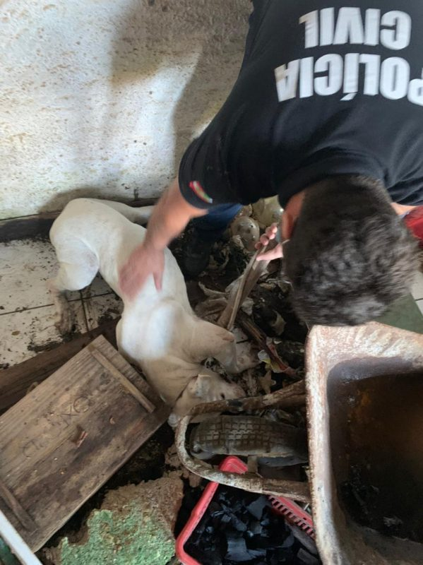 O animal foi recolhido e encaminhado ao Centro de Bem Estar Animal de Joinville, local em que receberá os cuidados necessários para o restabelecimento da saúde – Foto: Polícia Civil de Joinville/Divulgação ND