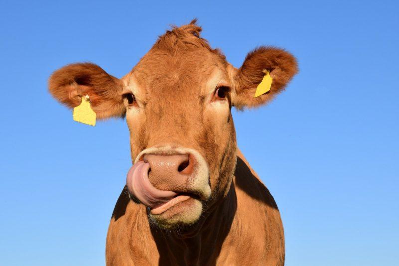 Ao todo, espera-se imunizar cerca de 170 milhões de animais – Foto: Pixabay/Reprodução