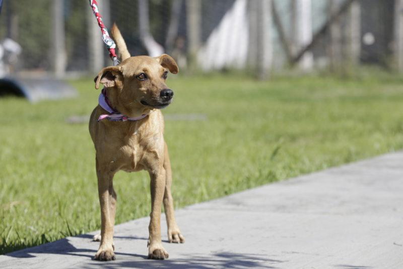 Nova lei vai proteger animais contra atos cruéis – Foto: Rogerio da Silva/ND