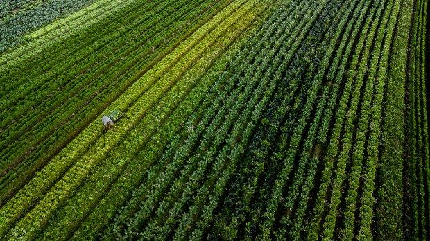 Agricultura e o agronegócio em SC – Foto: Ricardo Wolffenbuttel / Secom