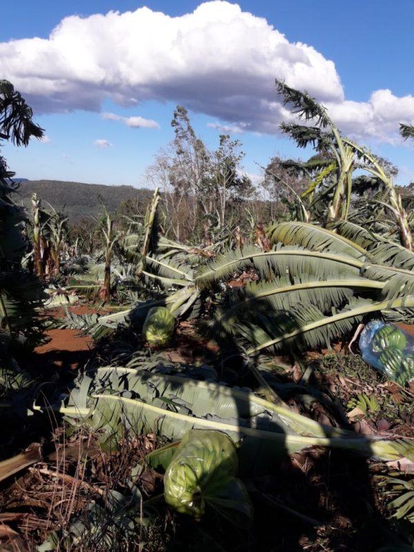 Produção de bananas foi a mais afetada pelos ventos fortes. – Foto: Divulgação/Epagri/ND