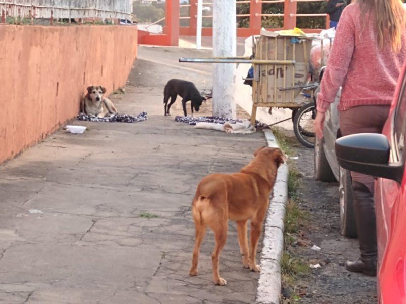 Os cães aguardavam o dono em frente ao hospital de Canoinhas – Foto: Arquivo pessoal