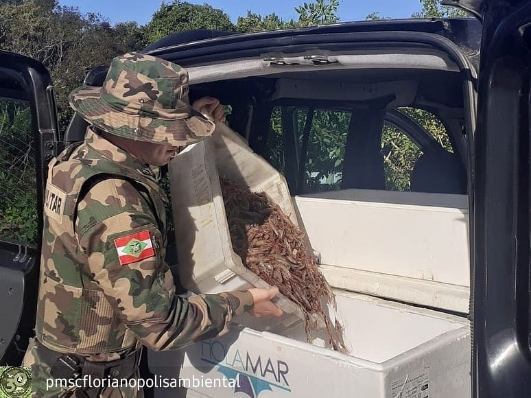 Polícia Militar Ambiental de Florianópolis fez a apreensão em Penha – Foto: PM Ambiental/Divulgação