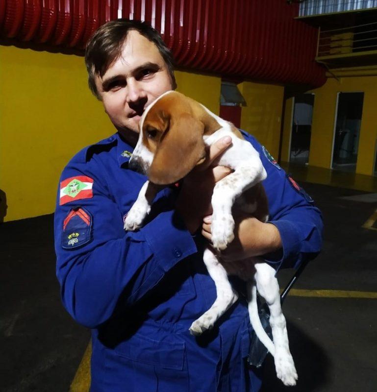 bombeiros e seus cães em treinamento em SC