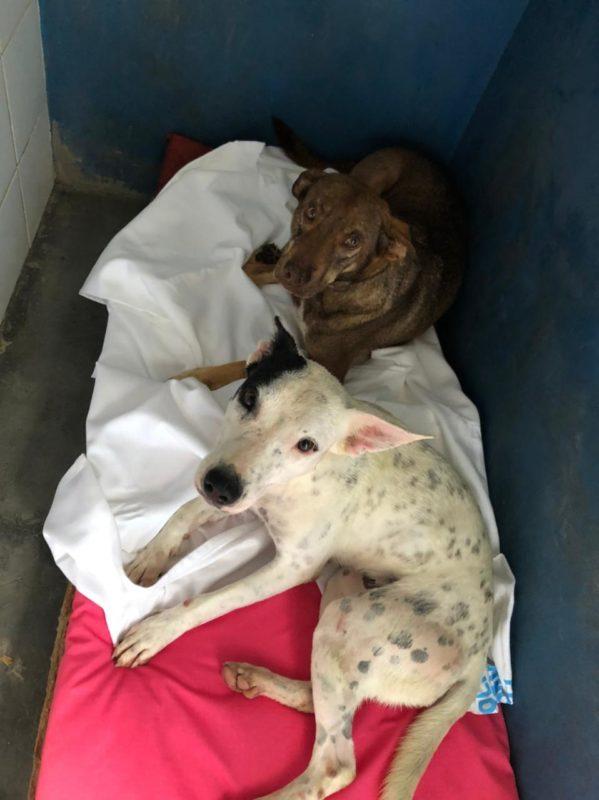 Animais abrigados na Dibea também receberam mantinhas para enfrentar o frio – Foto: PMF/Divulgação/ND